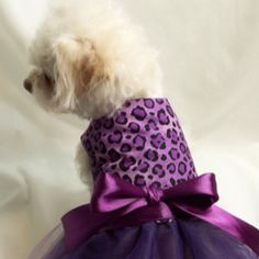 Tutu in purple for pup!