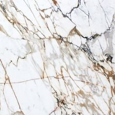 Calacatta Paonazzo Slab - look into maybe we can find some Calacatta for close to Carrera pricing