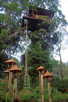 Green Magic Nature Resort, Kerala, India -- Probably not going to climb a hanging bridge to stay in a treehouse at the top of a 115 foot ficus tree, but it sounds like fun for those with no acrophobia.