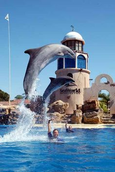 Of course, SeaWorld cannot be forgotten. Although it's probably frowned upon if you run throughout the park #EpicSummerWALK #EpicSummerRun