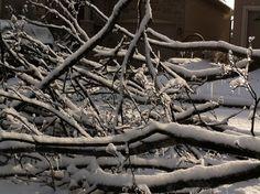 TO Ice Storm, Plants, Flora, Plant