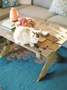I like the rug and the coffee table. And the kitty. :)