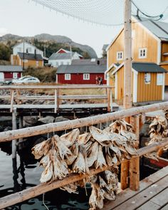 Drying cod fish in Nusfjord fishing town in Lofoten, Norway via Norway Travel Guide, Red Houses, Road Trip Destinations, Stay Overnight, Beaches In The World, Lofoten, Fishing Villages, White Sand Beach, Beach Trip