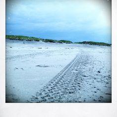 Ameland strand bij Buren