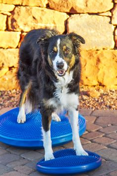 How To Get Started In Your Doggie Gym