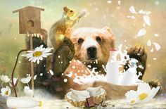 Bear and the Milk - animal, cookie, milk, bear, flower Cookie, Milk, Bear, Wallpaper, Dogs, Flowers, Animals, Biscuit, Animales