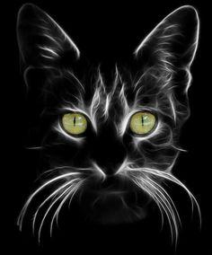 (I) (i) por Peyman Az - Gatos Animal Paintings, Animal Drawings, Black Paper Drawing, Beginner Painting, Cat Drawing, Drawing Tips, Fractal Art, Beautiful Cats, Rock Art