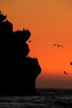 Sunset at Morro Rock, California.- these look like Bob Ross' em birds.  :)