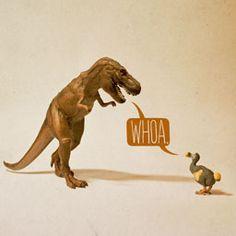 Oh T-rex Toy Stories by Aled Lewis, via Behance Illustrations, Illustration Art, Dinosaur Illustration, Character Illustration, Dinosaur Cards, Alternative Art, T Rex, Toy Story, Art Prints