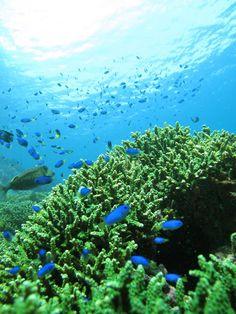 ヒリゾ浜 伊豆の海ってこんな綺麗なとこあるんだ Japan Landscape, Green Magic, Shizuoka, Scenery, Wildlife, Ocean, Beach, Nature, Fish