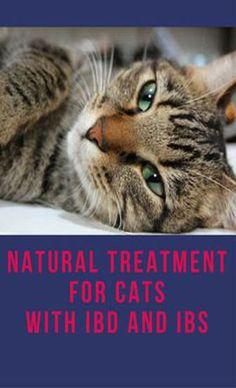 Inflammatory Bowel Disease in Dogs & Cats: Treatment Options Irritable Bowel Diet, Ibs, Ibd Diet, Diarrhea In Dogs, Cats Cast, Cat Diseases, Cat Vs Dog, Sad Cat, Gatos