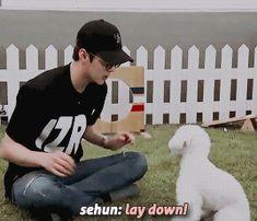 Sehun and Vivi Kaisoo, Kyungsoo, Sehun Vivi, Exo 2014, I Still Love Him, Proud Dad, Funny Tumblr Posts, Wattpad, Kpop
