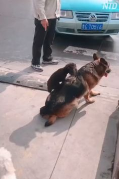 We'd like heros like this nice canine! Cute Animal Videos, Funny Animal Pictures, Cute Funny Animals, Cute Baby Animals, Funny Dogs, Animals And Pets, Animal Antics, Animal Memes, Cute Puppies