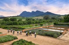 Franschhoek Food and Wine Tour Cape Town - Explore Sideways South Africa Honeymoon, Safari, Things To Do, Stuff To Do, Wine Tourism, Le Cap, Wanderlust Travel, Cape Town, Great Places