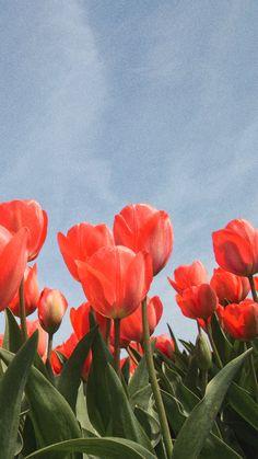 no rain no flowers Aesthetic Backgrounds, Aesthetic Iphone Wallpaper, Aesthetic Wallpapers, Nature Aesthetic, Flower Aesthetic, Iphone Background Wallpaper, Flower Wallpaper, Photographie Portrait Inspiration, No Rain No Flowers
