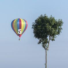 Mondial Air Ballons ® #advent #avent #adventballoon #ballondelavent #hotairballoon #montgolfiere #hotairballoons #montgolfieres #december #décembre #mondialairballons #oneballoonaday #unballonparjour #tree #arbre #brightcolors #couleurséclatantes