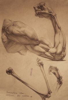 Great arm anatomy. http://ivany86.deviantart.com/art/human-anatomy-4-188801899?q=sort%3Atime%20gallery%3Aivany86&qo=100