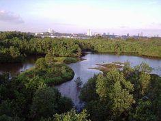 Sungai Buloh Wetland Reserve