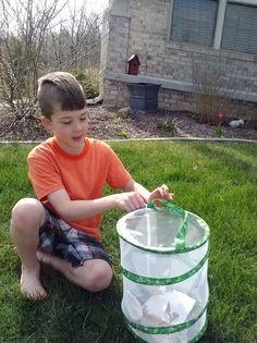 Kids raising caterpillars and then releasing butterflies