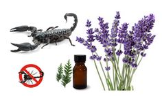 "Lavender is a natural Scorpion repellent.  The French use it all the time.  Remember Peter Mayle's novel ""A Good Year"" made into a movie with Russell Crow and Marion Cotillard???"