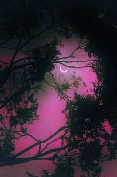 .see how the moon peeks through the trees.
