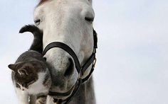 Horse and kitty love, just adorable!