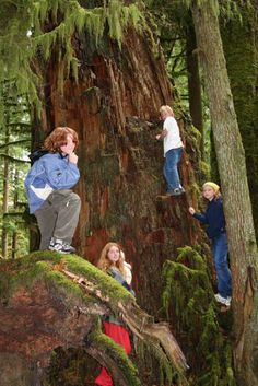Cathedral Grove is a great place to stop and stretch your legs on the ride to Tofino...