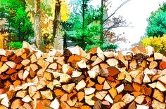 Stacked Fire Wood In Preparation For Winter 1 by Lanjee Chee - Royalty Free and Rights Managed Licenses Fall Trees, Sale Poster, New Print, Art Images, Firewood, Fine Art Prints, Coupon, Wall Art, Winter