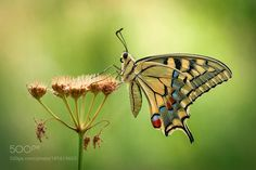 Yellow wings by AndreaPanozzi. @go4fotos