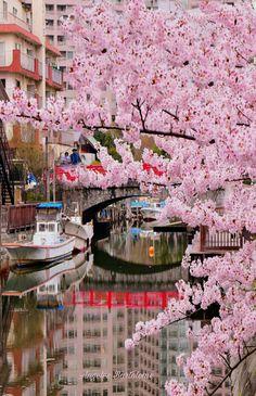 Japón me enamora. Distrito Central de Tokio