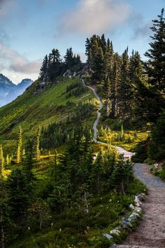 Alta Vista Trail, Mount Rainier National Park, Washington