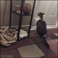 CAT GIF • CATapult! Amazing Cat reflexe. Please open the door and Startled Cat flies. Amazing Cat reflex. Startled Cat is flying like a rocket.