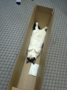 cats love a box