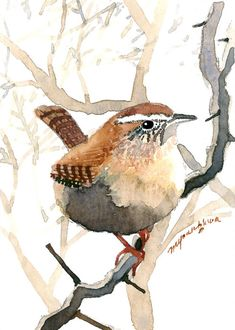 Items similar to ACEO Limited Edition - Wren in foggy forest, Bird art print, My favorite, Gift idea for bird lovers, Home decor idea on Etsy Watercolor Bird, Watercolor Artwork, Watercolor Animals, Watercolor Landscape, Watercolor Artists, Watercolor Portraits, Art Aquarelle, Foggy Forest, Bird Artwork