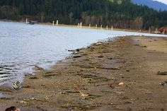 Fukushima Emergency what can we do?: Troubled waters: Nuclear radiation found in B.C. m...