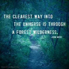 """The clearest way into the universe is through a forest wilderness"" quote by John Muir - Duly Posted"