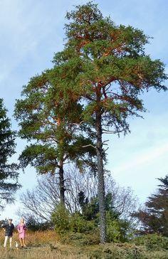 More tree builds! Beee - u - tee