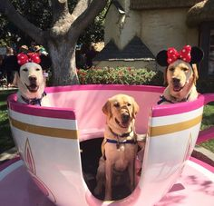 Oh how sweet! Cute Puppies, Cute Dogs, Dogs And Puppies, Doggies, Disney Day, Disney Parks, Disney Pictures, Cute Pictures, Alice In Wonderland Pictures