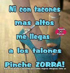 Pinche Zorra!