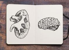 #kidney#brain#sketch