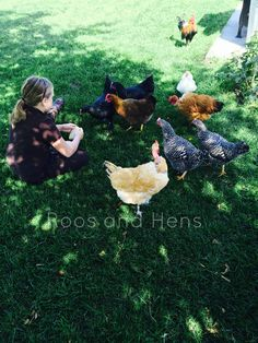 Chickens - Free therapy and life lessons. How chickens have helped my daughter through difficult times.