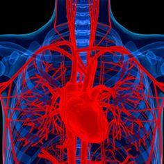 teoria polivagale, il cuore è il centro delle relazioni