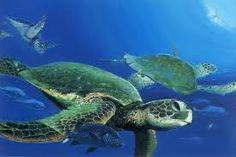 http://picturesofseaturtles.net/