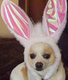 Cute & Fuzzy Easter dog #cutedogs #silly #animal