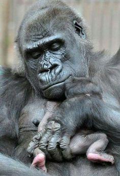 Muitas  mães deveriam aprende com os animais,  o verdadeiro amor  de  mãe