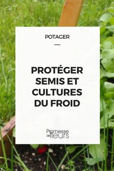 Potager : protéger semis et cultures du froid Growing Vegetables, Botany, Horticulture, Compost, Vegetable Garden, Letter Board, Cards Against Humanity, Green, Blog