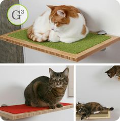 Great Green Pet Gift: Square Cat Habitat by Buddha