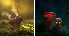 Mushrooms are often a favorite subject for macro photographers, but photographer and outdoor sports enthusiast Martin Pfister has found a refreshingly creative way to shoot these elegant and sometimes tasty fungi – he lights them up from behind with tiny LED bulbs to give them a magical glow! Pfister's photos, most of which he captures using a Canon EOS 6D, have a subtle fairytale-like quality.