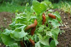 Ekologiczny ogród: wykorzystaj właściwości octu
