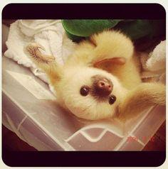 Sloth Saturday!